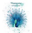 peacock watercolor beautiful bird design vector image