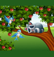 cartoon raccoon sleep on the apple tree vector image vector image