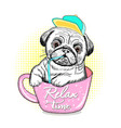 Cute pug puppy in a pink glasses its relax time