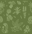 flowers and plants seamless pattern wild medical vector image vector image