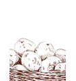 hand drawn sketch of potatoes in a basket eco vector image