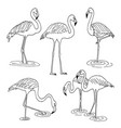 set of flamingo images vector image