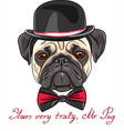 hipster serious dog fawn pug vector image
