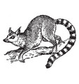 ring tailed lemur vintage vector image vector image
