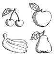 fruits sketch vector image vector image