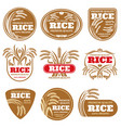 paddy grain organic rice labels healthy food vector image vector image