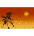 Sea and coconut palm sunset vector image vector image