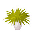 indoor houseplant in white pot green potted plant vector image