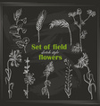 Set of isolated field plants in sketch style on vector image vector image