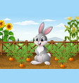 cartoon rabbit with carrot plant in the garden vector image vector image