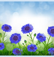 cornflowers with bokeh vector image vector image