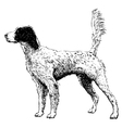 English setter 10 vector image vector image