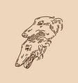 hand drawn russian greyhound vector image