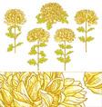 set of 5 chrysanthemum flower vector image vector image