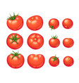 tomatoes icon isolated vector image