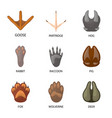 design animal and print sign collection vector image