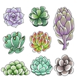 isolated colored succulents vector image vector image