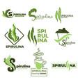 superfood or detox nutrition spirulina algae