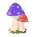 two mushrooms on white vector image vector image