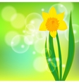card with daffodil on light green bokeh vector image vector image