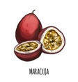 maracuja full color realistic hand drawn vector image vector image