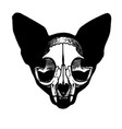 tattoo skull a cat vector image
