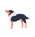 funny cartoon purebred collie dog flat vector image vector image
