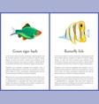 green tiger barb and striped butterfly fish images vector image vector image