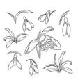 hand drawn elegant snowdrop vector image vector image