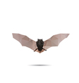 Bat abstract vector image vector image
