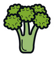 broccoli fresh vegetable icon vector image
