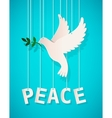 Dove with olive branch vector image