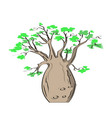 african iconic tree baobab tree adansonia gregorii vector image