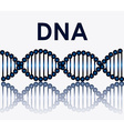 DNA design vector image vector image