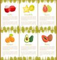 lychee carambola guava kumquat avocado mamey vector image vector image