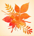 Orange watercolor painted autumn foliage vector image vector image