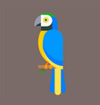 parrot bird blue breed species animal nature vector image vector image