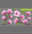 realistic magnolia flower transparent icon set vector image vector image
