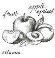 apple and apricot fruit group set hand drawn vector image vector image