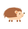 forest hedgehog animal wild fauna nature vector image