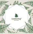 frame of leatherleaf fern botanical vector image vector image