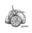 lemon monochrome vector image