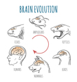 Brain Evolution vector image