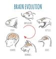 Brain Evolution vector image vector image