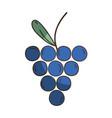 delicious fresh grape organic fruit vector image vector image