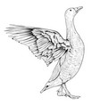 goose sketch angry bird with lifted wings vector image