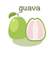 Guava icon in flat style Isolated objec vector image vector image