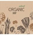 Hand-drawn vegetables on cardboard vector image vector image