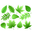 set of green leaves and branches vector image