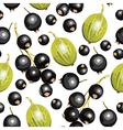 blackcurrant guseberry vector image vector image